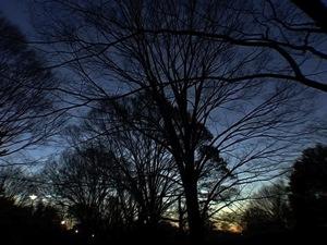 03 main tree